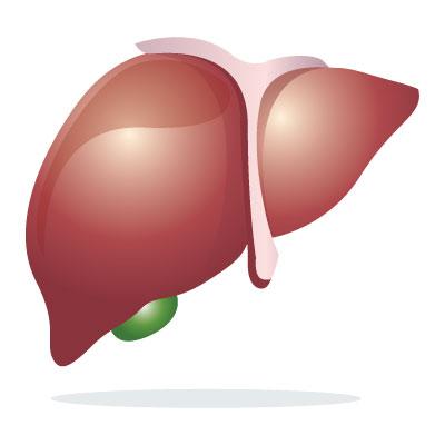 -hepatoprotective