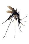 antiperiodic-antimalarial
