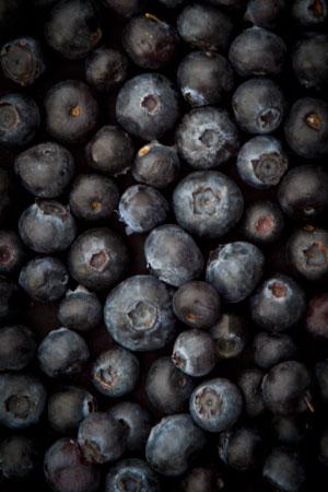 bilberry-europe-huckleberry-blueberry-north-america-vaccinium-myrtillus