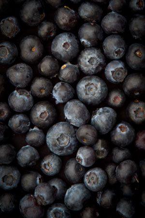 bilberry-vaccinium-myrtillus