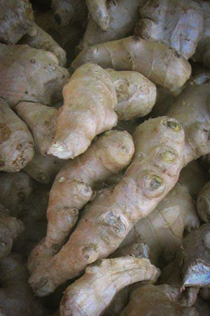 ginger-zingiber-officinale