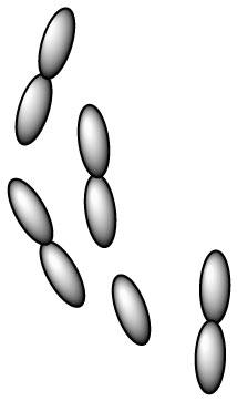 lactobacillus-helveticus-l-helveticus